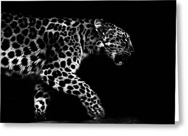 Bigcat Greeting Cards - Amur Leopard Greeting Card by Martin Newman