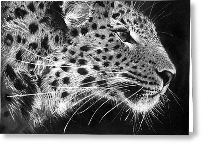 Leopard Drawings Greeting Cards - Amur Leopard Greeting Card by Sharlena Wood