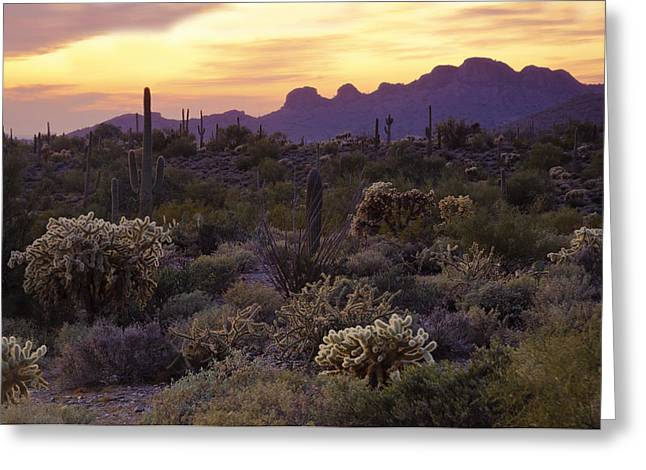 The Superstitions Greeting Cards - An Evening in the Desert  Greeting Card by Saija  Lehtonen