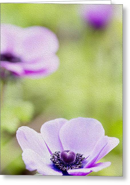 Photo Effects Greeting Cards - Anemone - Purple Center Greeting Card by Rebecca Cozart