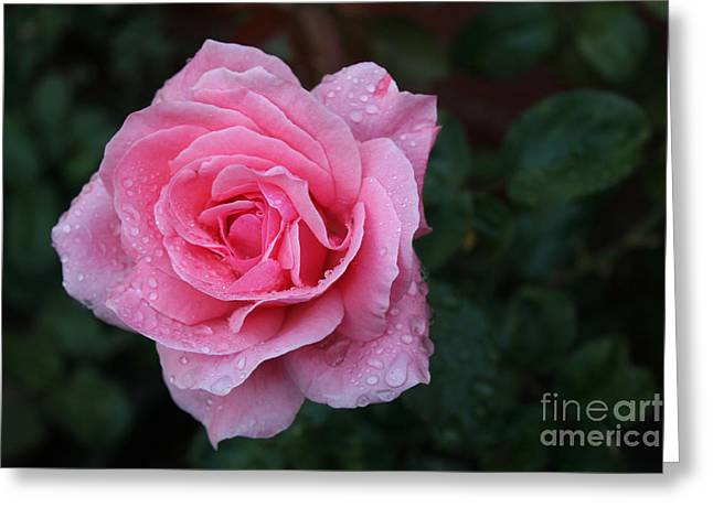 Angel Face Rose Greeting Card by Jose Valeriano