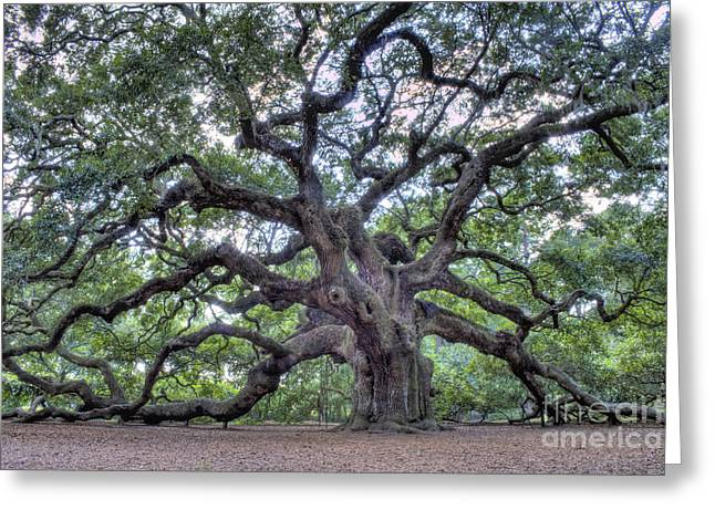 Johns Greeting Cards - Angel Oak Greeting Card by Dustin K Ryan
