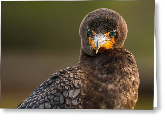 Neck Greeting Cards - Another Cormorant Face Off Greeting Card by Andres Leon