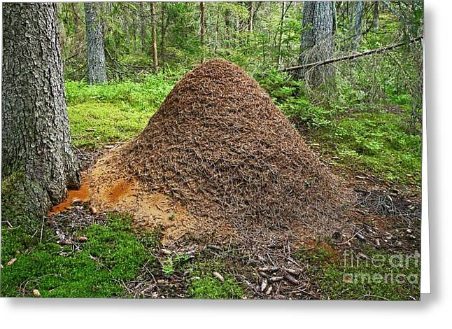 Mud Nest Greeting Cards - Ant Hill Greeting Card by Bjorn Svensson