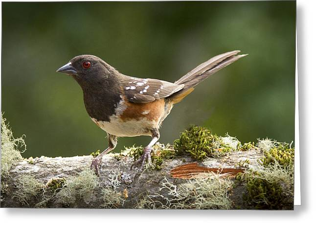 Sparrow Greeting Cards - Anticipation Greeting Card by Jean Noren