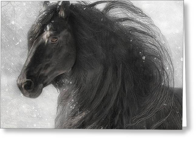 Friesian Greeting Cards - Anton 343 Frosty Greeting Card by Fran J Scott