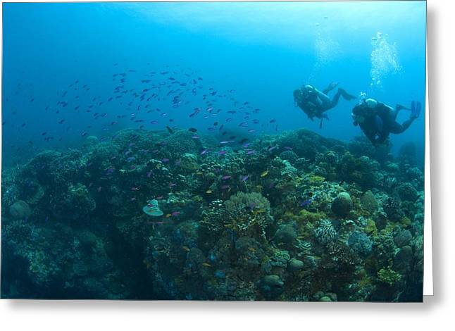 Apo Greeting Cards - Apo Island Marine Park, Philippines Greeting Card by Stuart Westmorland