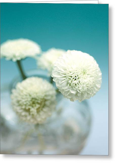 Floral Photographs Greeting Cards - Aqua dream Greeting Card by Nastasia Cook
