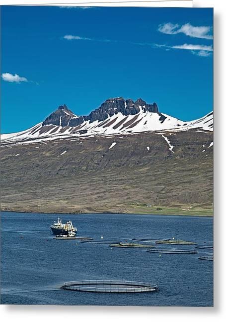 Icelandic Fish Greeting Cards - Aquaculture Salmon Farm Greeting Card by Dirk Ercken