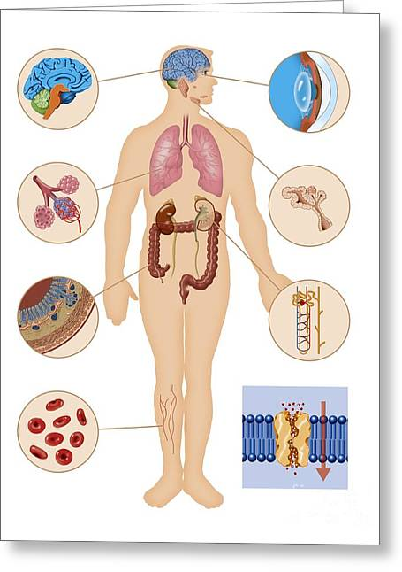 Human Potential Greeting Cards - Aquaporin Roles In The Body Greeting Card by Art for Science