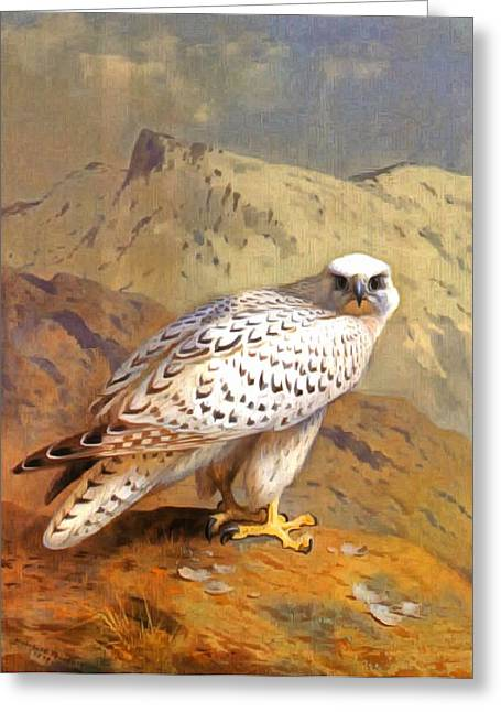 Soaring Falcon Greeting Cards - Greenland Falcon Greeting Card by Archibald Thorburn