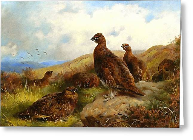 Recently Sold -  - Hunting Bird Greeting Cards - Red Grouse Greeting Card by Archibald Thorburn