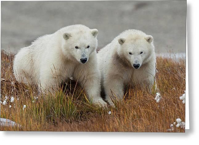 Arctic National Wildlife Refuge (anwr Greeting Card by Hugh Rose
