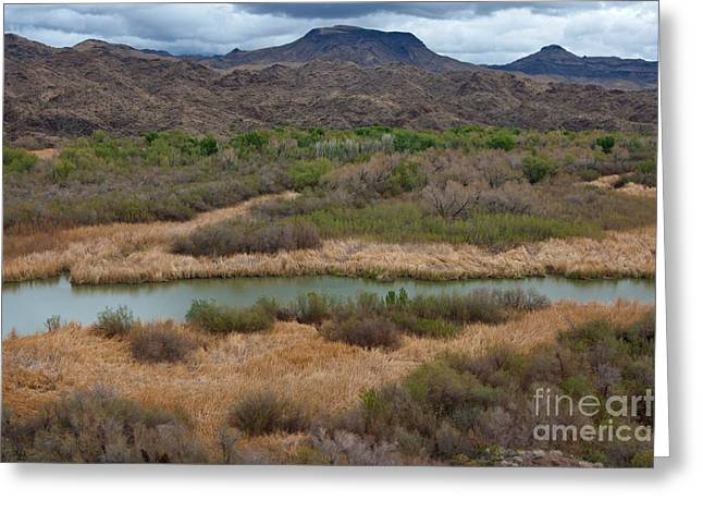 Arizona Wildlife Greeting Cards - Arizona Landscape Greeting Card by Richard and Ellen Thane