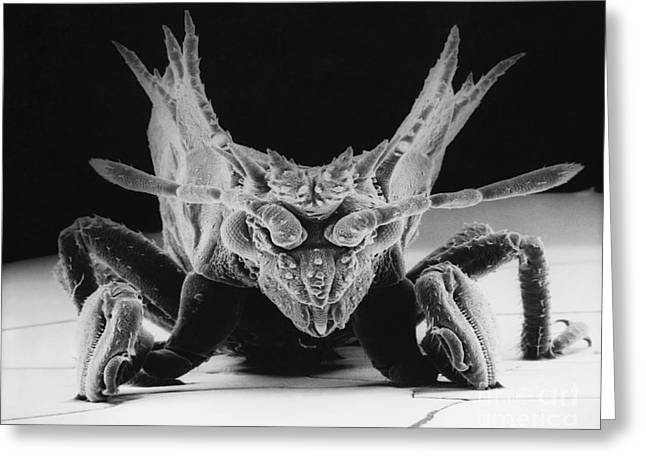 Up-armored Greeting Cards - Armored Bug Greeting Card by David M. Phillips