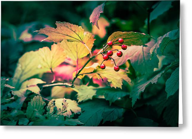Autum Abstract Greeting Cards - Arrowwood berries - Featured 3 Greeting Card by Alexander Senin