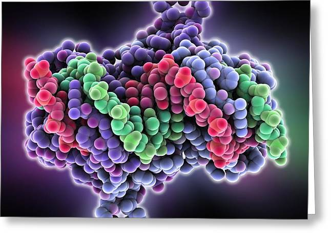 Trna Greeting Cards - Aspartyl-tRNA synthetase protein Greeting Card by Science Photo Library