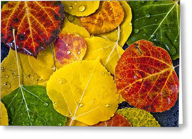 Tree Leaf On Water Photographs Greeting Cards - Aspen Rainbow Greeting Card by Teri Virbickis
