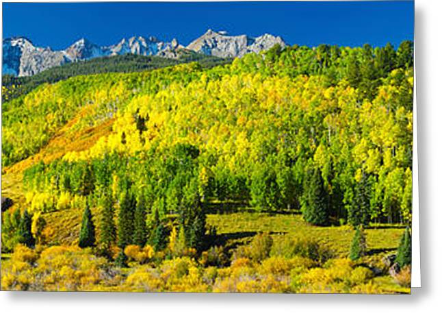 Autumn Colors Greeting Cards - Aspen Trees On Mountains, Uncompahgre Greeting Card by Panoramic Images