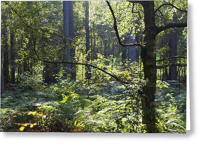Guise Greeting Cards - Aspley woods Greeting Card by David Isaacson