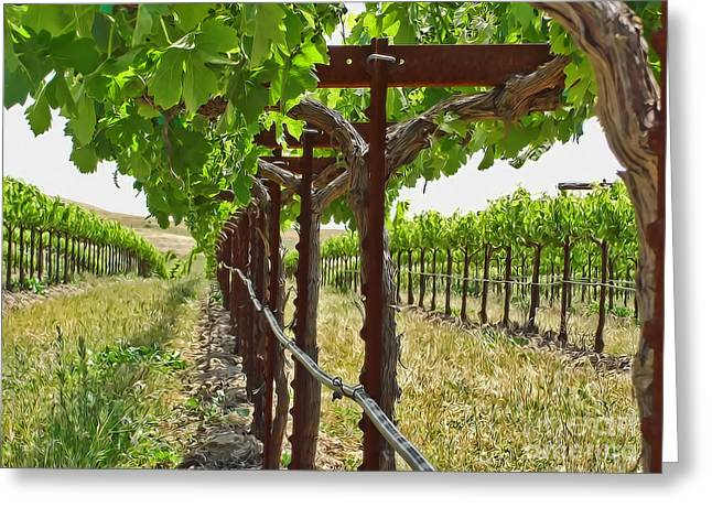 Grapevines Greeting Cards - At the Vineyard Greeting Card by Jim Sweida