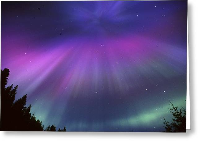 Beautiful Creek Greeting Cards - Aurora Corona Over Crow Creek Girdwood Greeting Card by Daryl Pederson