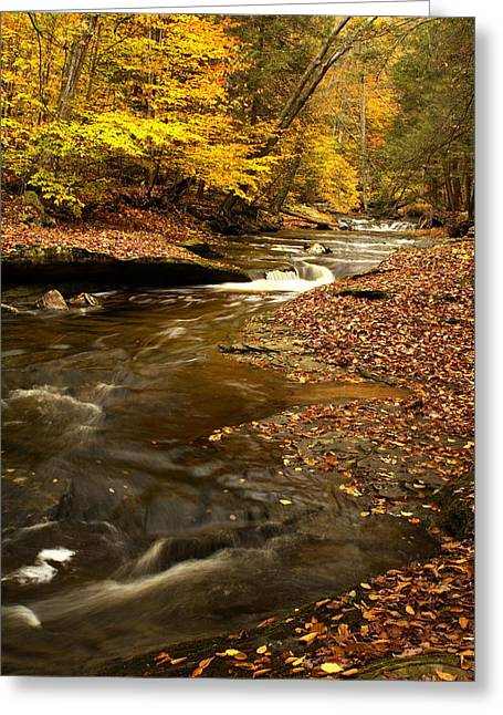 Tree Roots Digital Art Greeting Cards - Autumn and Creek Greeting Card by Amanda Kiplinger