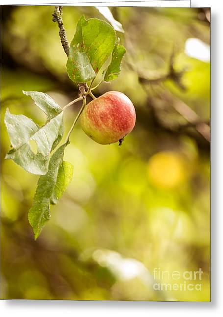 Wimbledon Photographs Greeting Cards - Autumn Apple Greeting Card by Matt Malloy