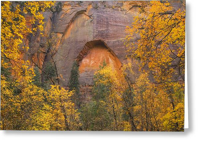 West Fork Greeting Cards - Autumn Arch Greeting Card by Peter Coskun