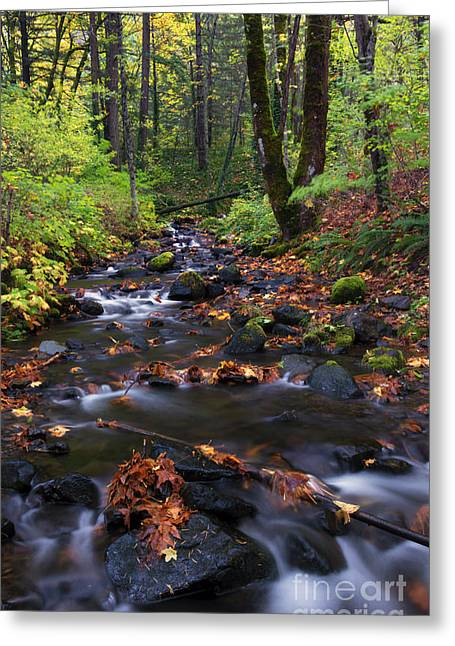 Starvation Greeting Cards - Autumn Breeze Greeting Card by Mike Dawson