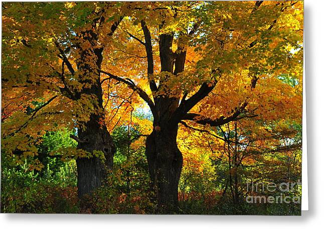 Fall Colors Greeting Cards - Autumn Canopy Greeting Card by Terri Gostola