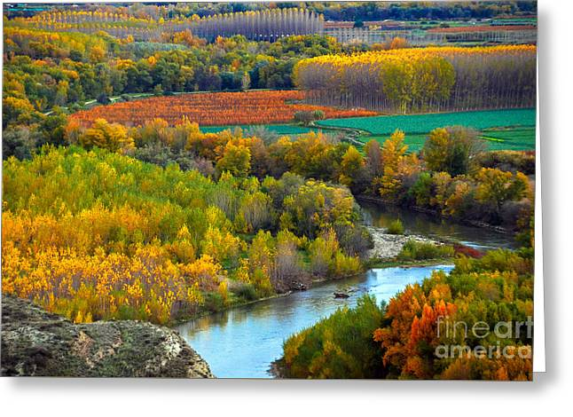 Landscape Posters Greeting Cards - Autumn Colors On The Ebro River Greeting Card by RicardMN Photography