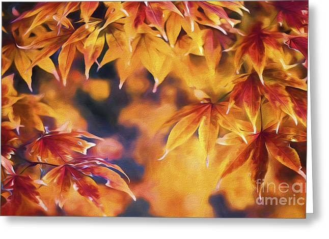 Abstract Nature Greeting Cards - Autumn Colors Greeting Card by Veikko Suikkanen