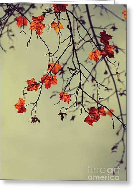 Leafed Greeting Cards - Autumn Greeting Card by Diana Kraleva