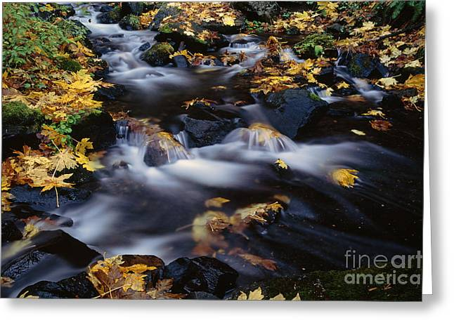 State Parks In Oregon Greeting Cards - Autumn Fall colors Starvation Creek State Park Greeting Card by Jim Corwin
