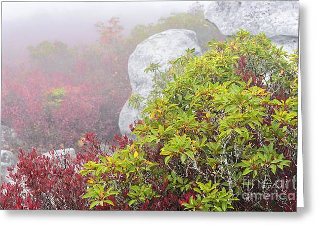 Heathland Greeting Cards - Autumn Fog Bear Rocks Greeting Card by Thomas R Fletcher
