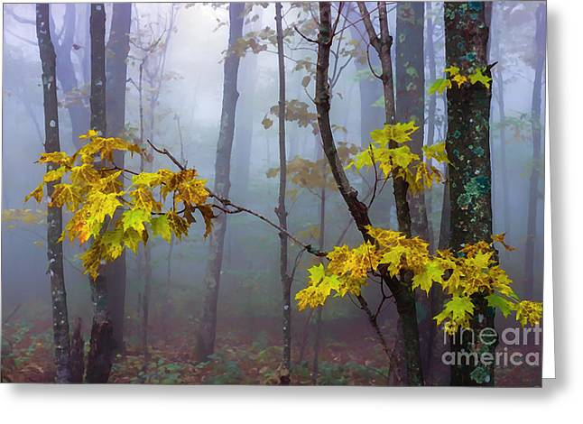 Autumn Fog Monongahela National Forest Greeting Card by Thomas R Fletcher