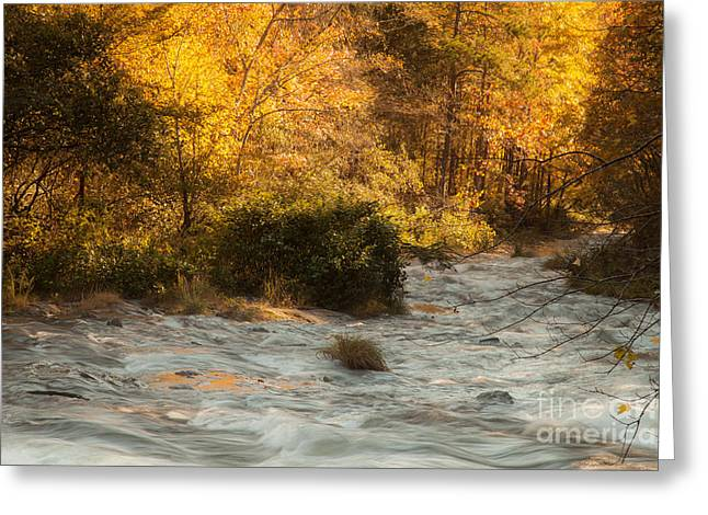 Beavers Bend Park Greeting Cards - Autumn Forest Greeting Card by Iris Greenwell