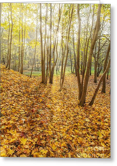 Hdri Greeting Cards - Autumn forest park Greeting Card by Aleksey Tugolukov