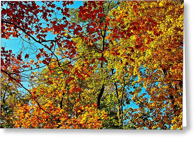 Indiana Autumn Greeting Cards - Autumn in Indiana  Greeting Card by Ruth Hager