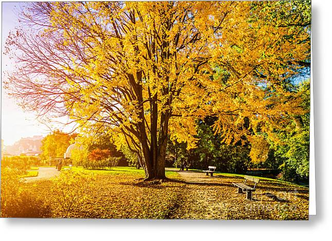 Salzburg Greeting Cards - Autumn In The Park Greeting Card by JR Photography