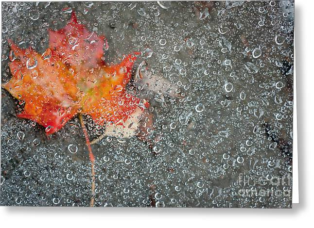 Coldly Greeting Cards - Autumn Greeting Card by Jochen Schoenfeld