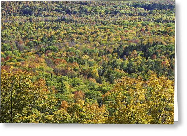 New England Wilderness Greeting Cards - Autumn Landscape Mount Blue State Park Weld Maine Greeting Card by Keith Webber Jr