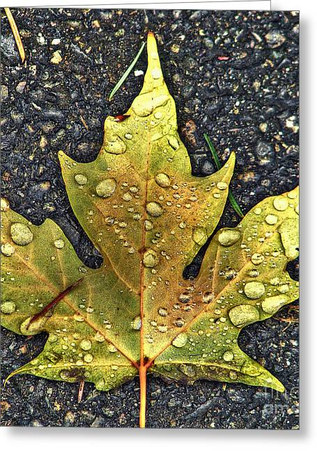 Faa Featured Work Greeting Cards - Autumn Leaf HDR Greeting Card by Chris Anderson