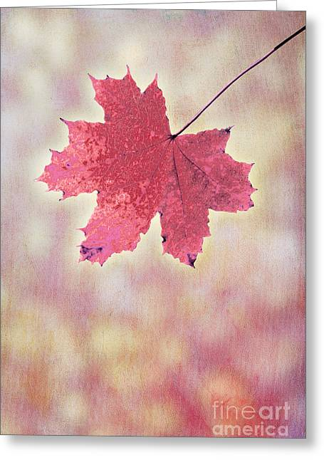 Autum Greeting Cards - Autumn Leaf Greeting Card by Viaina