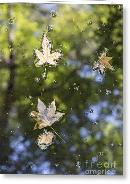 Fall Colors Greeting Cards - Autumn Leaves Greeting Card by Dustin K Ryan