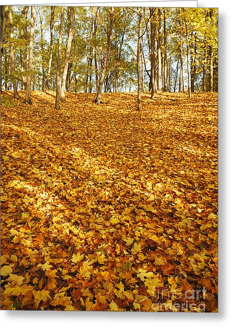 Hdri Greeting Cards - Autumn leaves on ground Greeting Card by Aleksey Tugolukov
