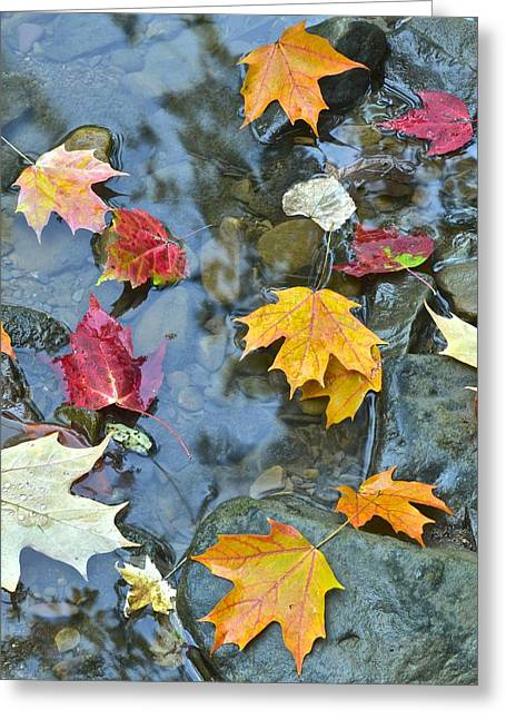 Oak Creek Greeting Cards - Autumn Leaves Greeting Card by Frozen in Time Fine Art Photography