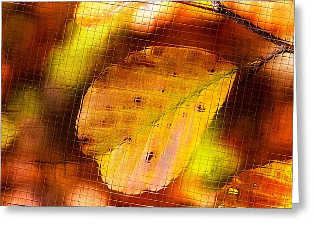 Single Mixed Media Greeting Cards - Autumn leaves Greeting Card by Toppart Sweden