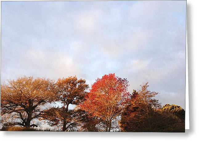 Red Leaves Greeting Cards - Autumn Greeting Card by Les Cunliffe